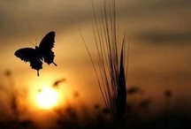 """""""With flying Colors"""" / What the caterpillar calls the end of the world the master calls a butterfly. ~ Richard Bach"""