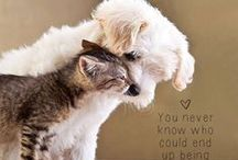 Cute Animals / Rescue's Welcome on this board too!