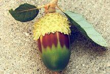 Chestnuts & Acorns