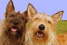 Dog Chien Hond Inu Pies Hund Perro Cane
