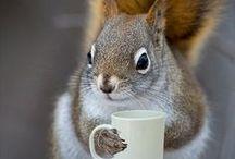 Squirrels / by Lela Long
