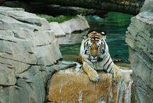 Animais - so cute / Os animais mais fofos de sempre
