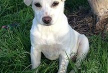 Louisiana / Animal rescues for Louisiana welcome on this board! :) If you would like to join this board please send me a pin letting me know you want an invitation! :)