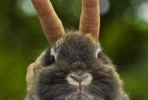 Bunny! / by Anna