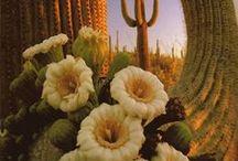 Cactus gallery / Cacti