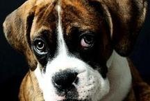 Love Dogs / by Brenda Crambell
