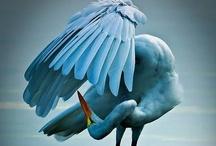Birds and Bird housing