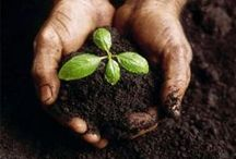 Science: Plants & Soil / Plants / soil resources -- articles, lessons, ideas