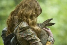 Bunnies, Rabbits and Hares