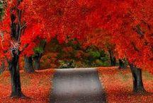 Fall into fall...... / by Alicia Ware
