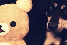 Luke / My crossbreed Jedi dog