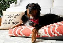 Creature Comforts / Stylish collection of pet essentials.