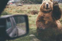 """All Around You... Life / """"Tous les animaux connaissent ce qui leur est nécessaire, excepté l'homme."""" Pline l'Ancien"""
