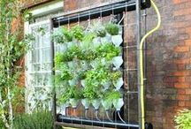 GARDEN:  HYDROPONICS 101 / An alternative way to garden.   / by KELLY CARROLL