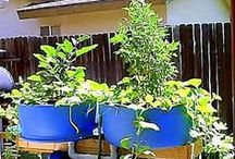 GARDEN:  AQUA & HYDROPONICS / Another way to garden and grow fish too!   / by KELLY CARROLL