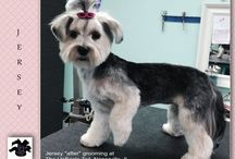 Pet Grooming, The UpScale Tail, Award Winning Groomers Stylists / Tender Loving Care for All Pets  Certified Nationally Ranked Groomers Stylists! www.theupscaletail.us Groom Team USA, Top Ten Groomers!