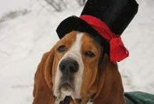 Holiday Family Photos / Pin your favorite pet friendly family photos and schedule your pet's healthy, Holiday Grooming!