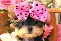 Doggie Dress Ups / Doggies are cute and even cuter when dressed for a special occasion.