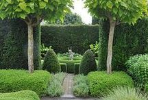 MaTT_garden nature / inspiration for the creation of the forbidden garden next place of residence