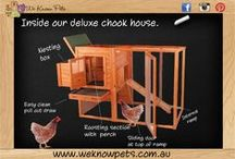 Poultry / Keeping backyard poultry