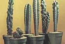 Plants - cacti