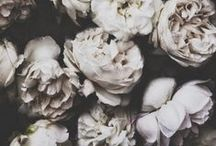 Flores / by Clara Terrasa