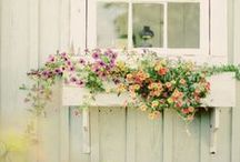 Window boxes for the house & garden / Brighten up your house with flowers in window boxes
