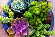 Succulents / Super plants especially if you are not too hot on watering ;-)