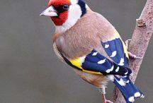 Feathers & Birds