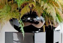 potterypots | perfect black
