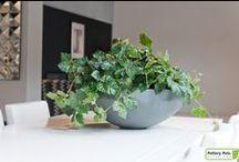 Pottery pots | Plants