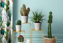 só cactus / quero ter um cactus chamado regina e outro chamado rodolfinho