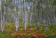 Bomen en hout