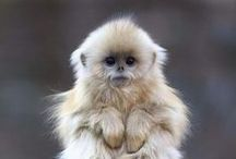 Zwierzaki cudaki :)