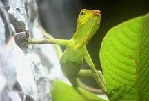 adibudojo - National Geographic / from NetGeo