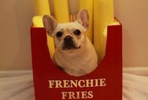 French up your life / French bulldogs, Frenchies