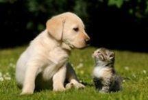 η παρέα του Επταπυργίου / αδέσποτα και οικόσιτα ζώα