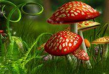 Mushrooms / Toadstool, Fungus, Fungi, Mushroom, Paddestoel, Paddenstoel, schimmel / by Inge aka Storm T