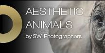 Aesthetic Animals / A collection of animal photographs shot by Severin Wendeler photographers.