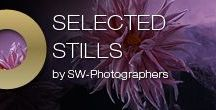 Selected Stills / A collection of still life photographs shot by Severin Wendeler photographers.