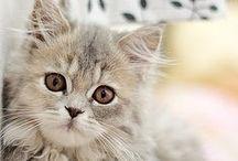 Cats / by Leora Schneider