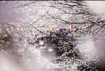 Livre - Tokyo Ohanami / Tokyo Ohanami est un livre de photographies sur la floraison des cerisiers à Tokyo | Photographies, textes et illustrations : Alexandre Bonnefoy | Editions Issekinicho | 29 € |