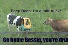 I find this funny / by Elizabeth Ann Johnson