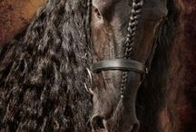 Nature(horses)