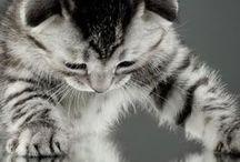 Universe(cats)