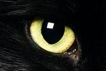 Kočičí oko (Cat's eye) / Máte rádi kočky?Tyhle jsou velmi roztomilé! (Do you like cats? These are very cute!)