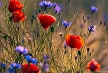 Příroda (Nature) / Květiny, rostliny, stromy, zvířata... (Flowers, plants, trees, animals ...)