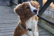 Psi (Dogs) / Nejlepší přítel člověka. (The best friend of human.)