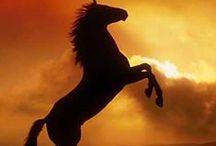 Podkova (Horseshoe) / Není to jednorožec :( . (It is not a unicorn :( .)
