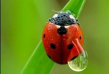 LADY BUGS LOVER